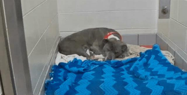 Il-salvataggio-di-Maria-la-cagnolina-incinta 1