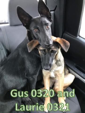il-legame-speciale-di-Gus-e-Laurie 1