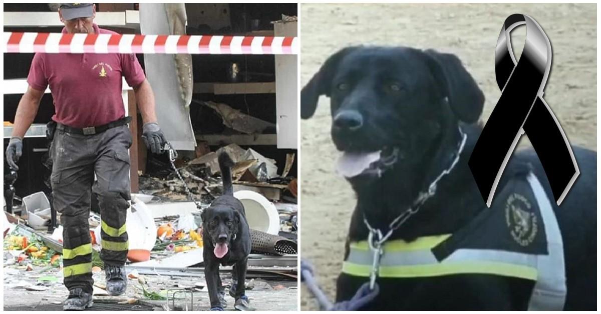 addio-tommy-il-cane-eroe-che-salvo-le-vittime-del-terremoto-dellaquila