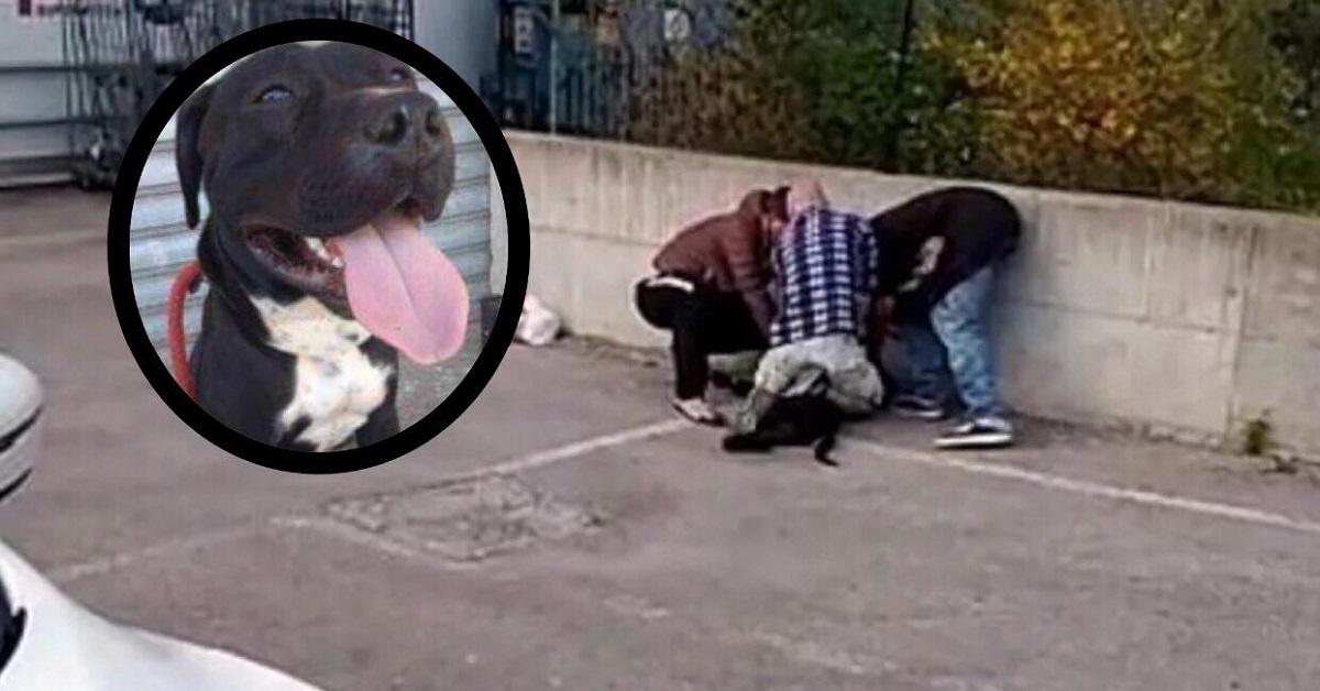 agordo-pitbull-aggredisce-proprietario