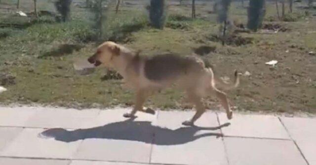 cagnolina-porta-ciotola-cibo-cuccioli