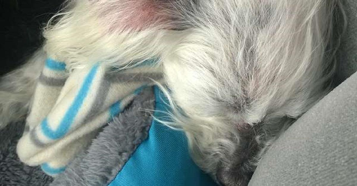 cane-abbandonato-in-una-clinica-veterinaria-non-sembra-nemmeno-un-cane