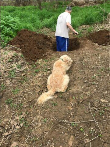 cane-aspetta-soppressione