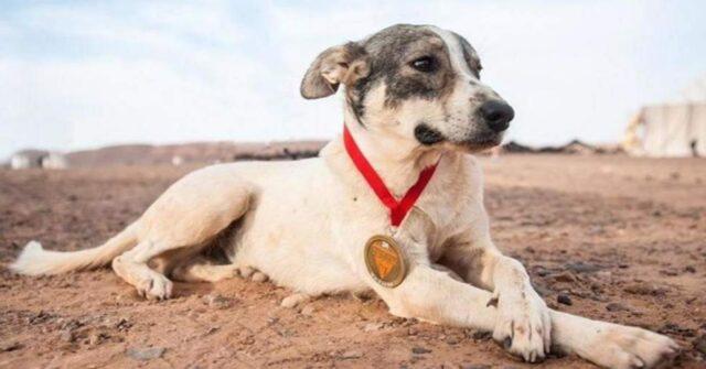 cane-corre-per-piu-di-100-miglia-per-terminare-la-maratona-nel-deserto