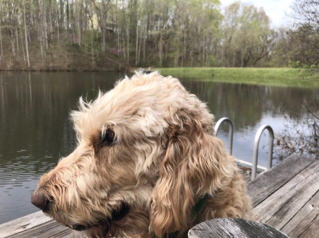 cane-miracolato