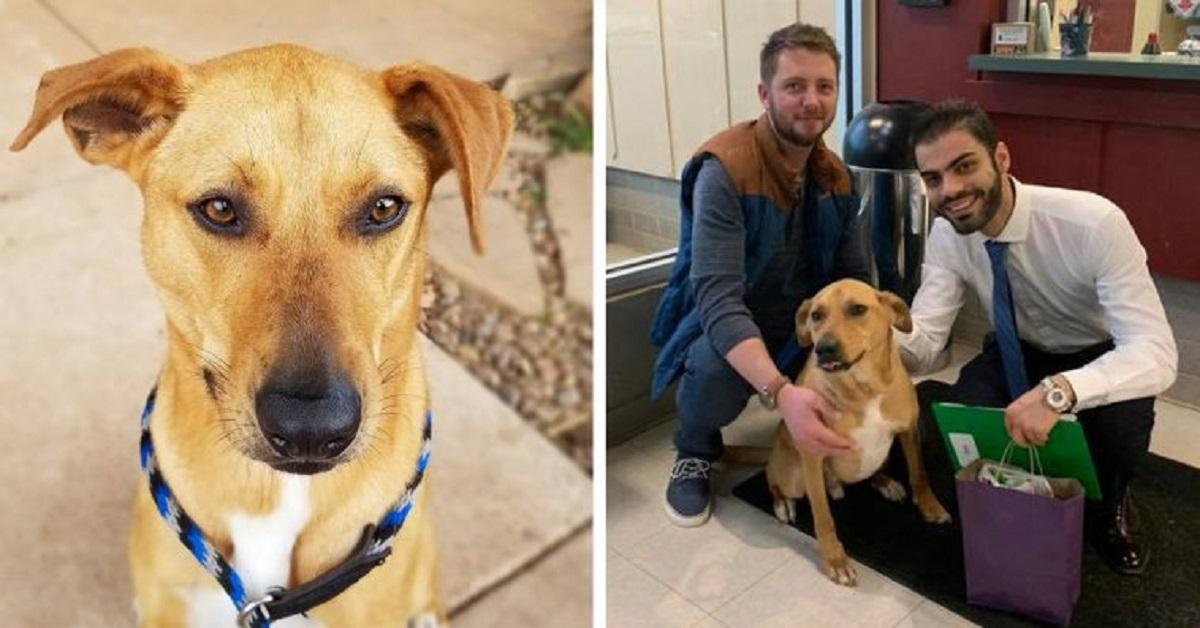 cane-ritorna-al-rifugio-per-8-volte-prima-di-trovare-la-sua-famiglia-per-sempre