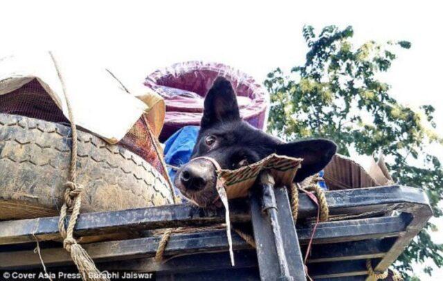 il-cane-sul-tetto-del-furgone