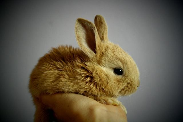 conigli-linguaggio