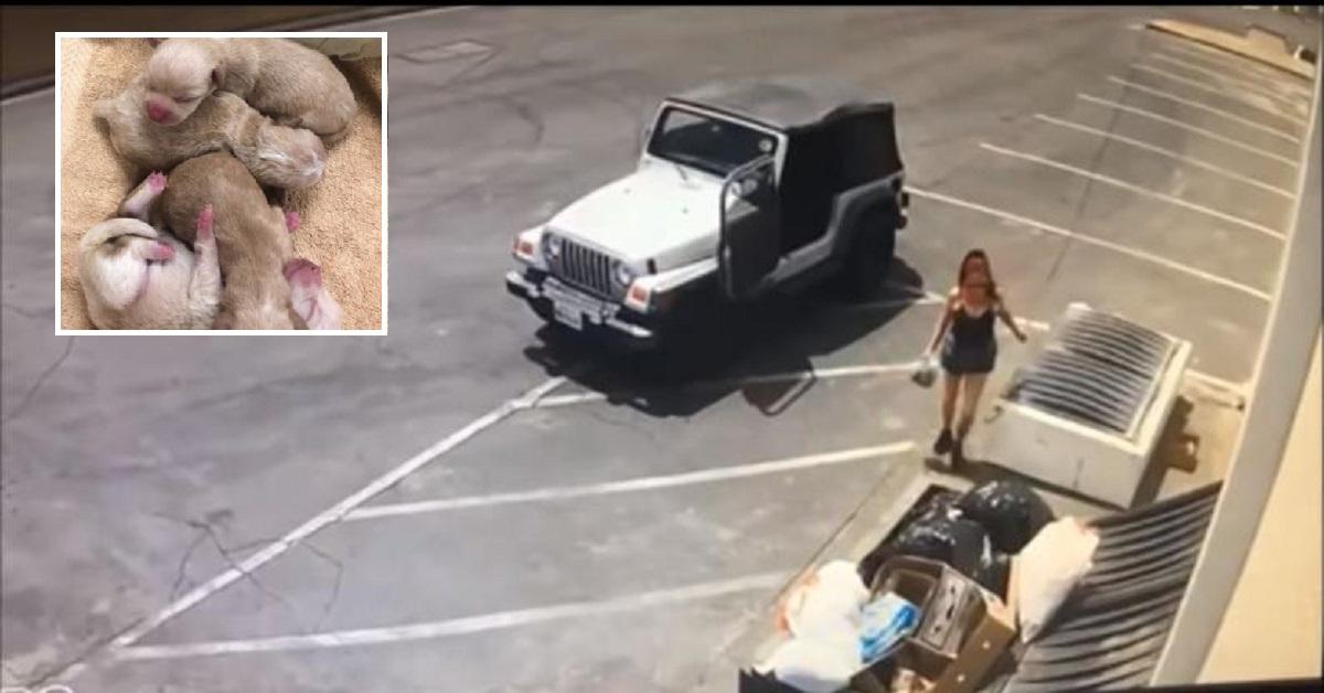 Donna filmata mentre getta 7 cuccioli appena nati nel cassonetto