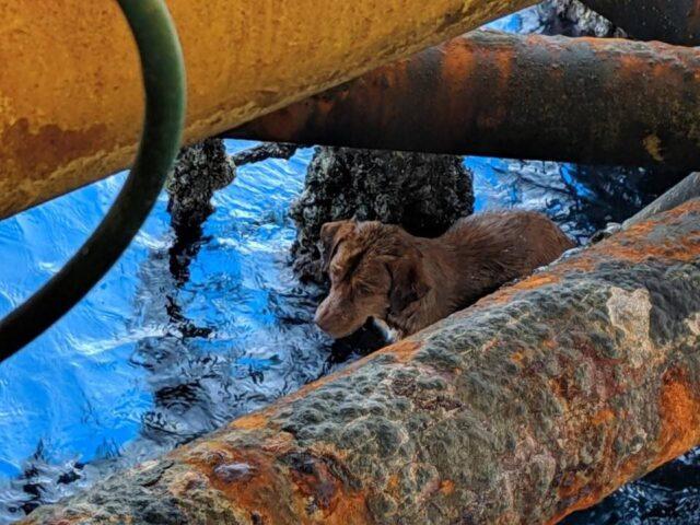 il-cane-lasciato-in-mezzo-al-mare