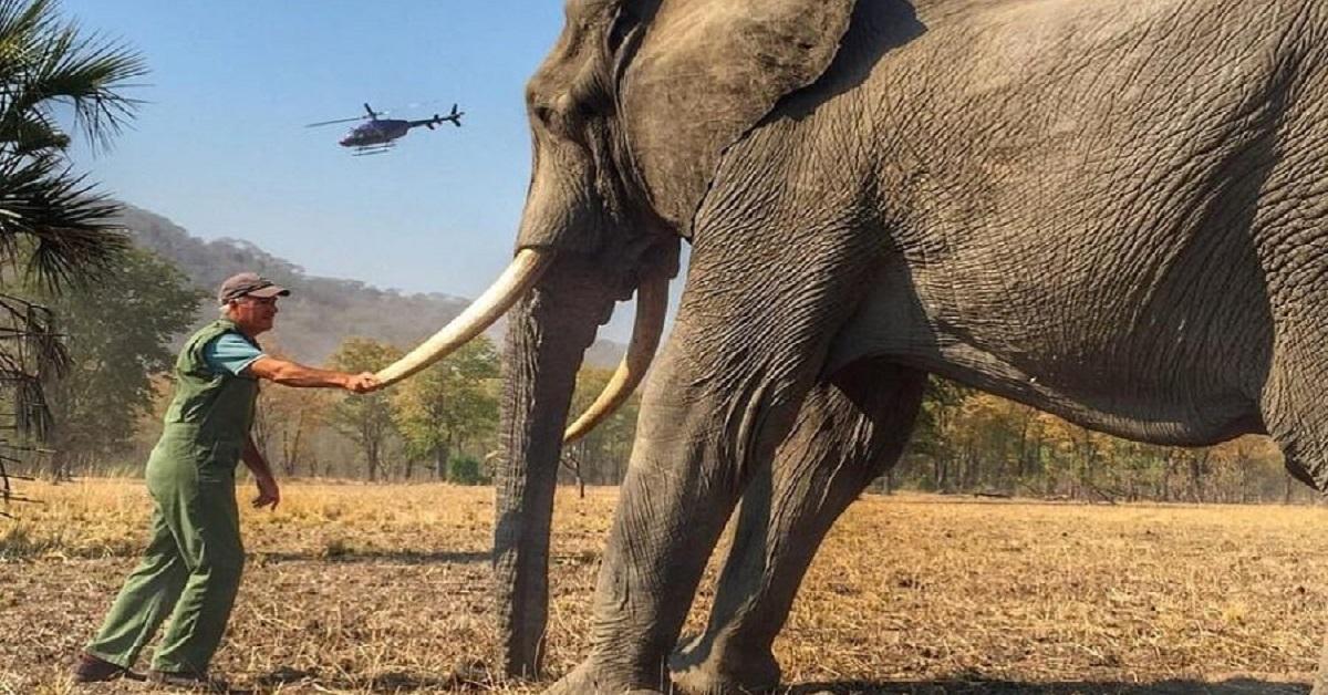 elefante-uomo