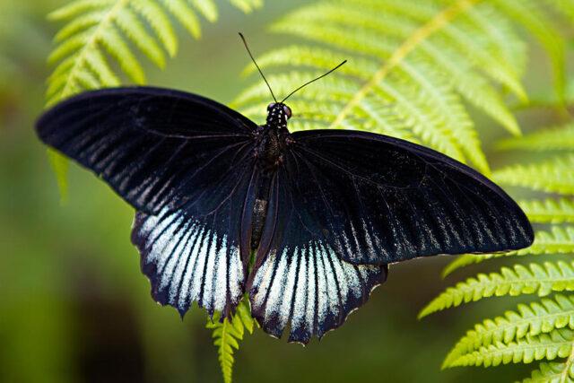 Farfalle come presagi: i loro colori e significati - Bigodino