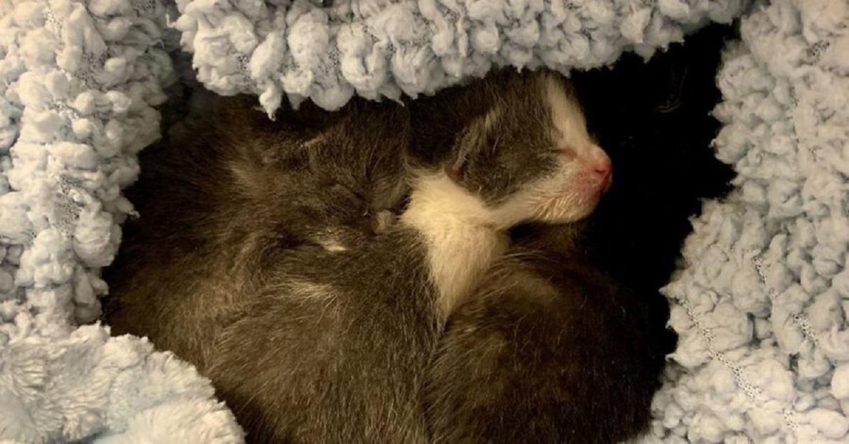 gattini-orfani-salvati-dalla-strada-hanno-bisogno-di-una-mamma