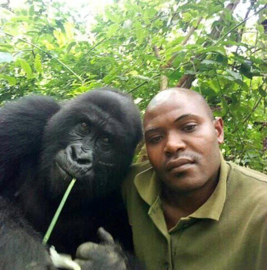 selfie con i gorilla