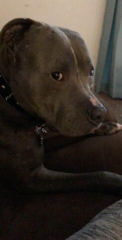 Re-Zeus-il-cane-che-non-voleva-adottare-nessuno