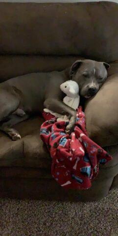 Re-Zeus-il-cane-che-non-voleva-adottare-nessuno 1