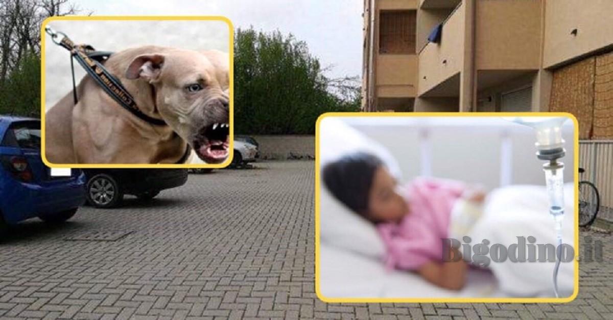 limbiate-due-bambini-aggrediti-da-un-pitbull