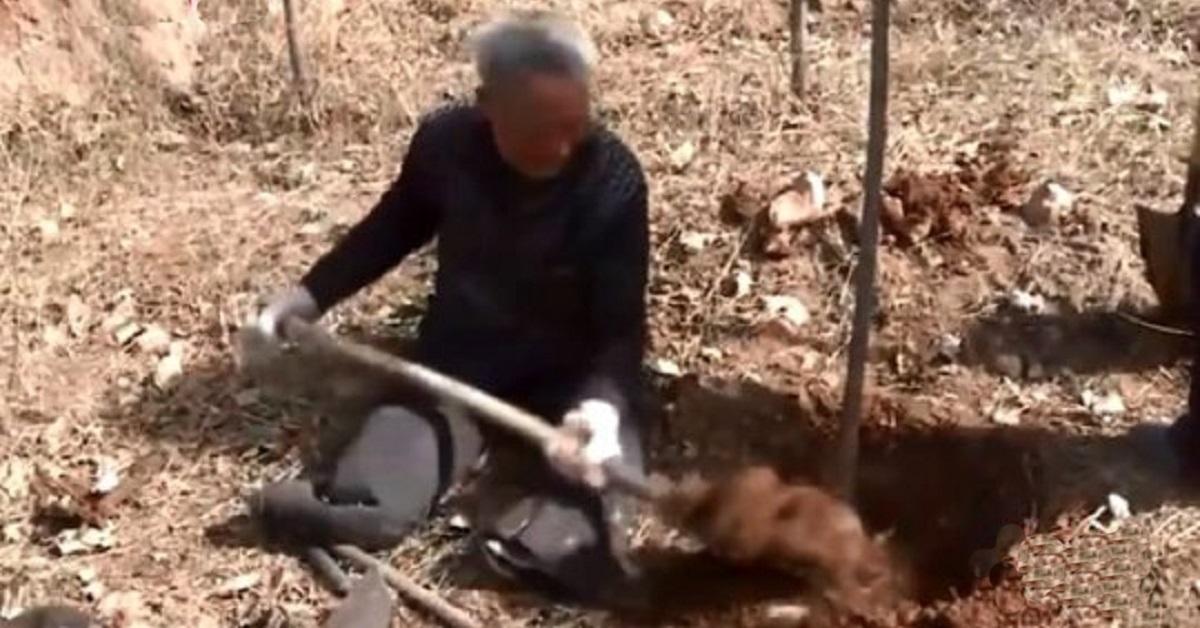 ma-sanxiao-il-settantenne-senza-gambe-che-pianta-alberi