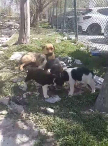 mamme-cuccioli