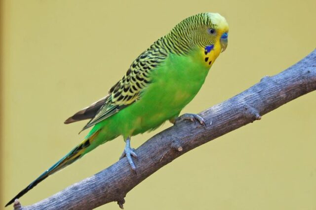 liberati-500-uccelli 2