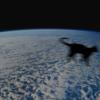 pikachu-il-gatto-che-sara-lanciato-nello-spazio
