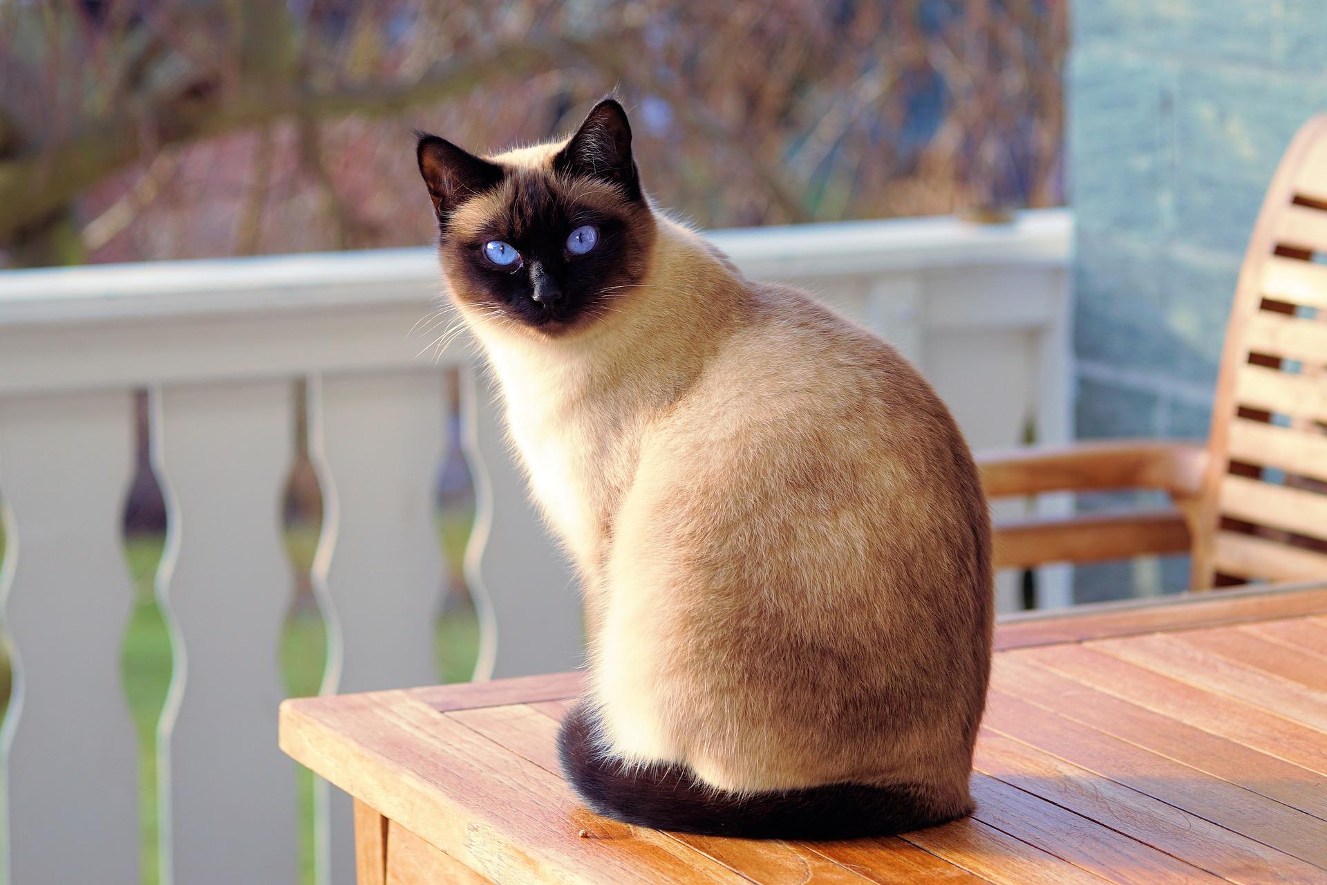 Rete Per Balconi Bambini reti per balconi per evitare che i gatti cadano | bigodino