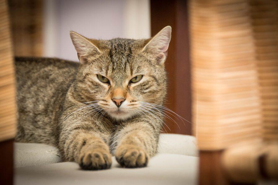 reti per gatti