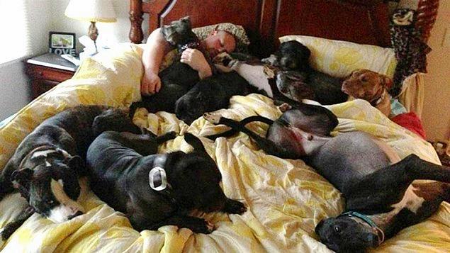 coppia-fa-costruire-un-letto-enorme-per-far-dormire-con-loro-i-cani