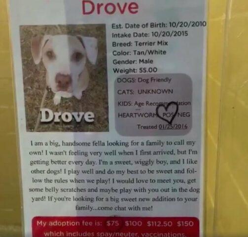 Drove-il-cane-abbandonato-e-traumatizzato 1