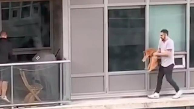 uomo-salva-gatto