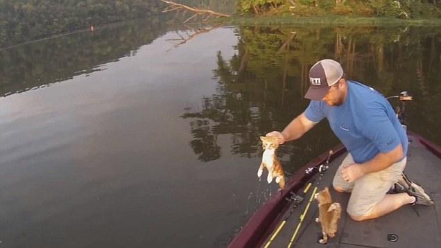 i-due-gattini-abbandonati-in-mezzo-al-lago 2