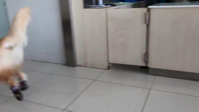 il-cane-che-ama-andare-dal-veterinario 2