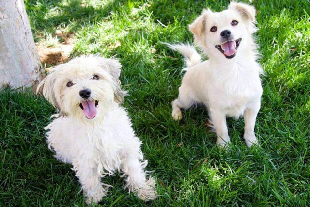 i-due-cuccioli-che-vivevano-per-le-strade-di-Los-Angeles 2