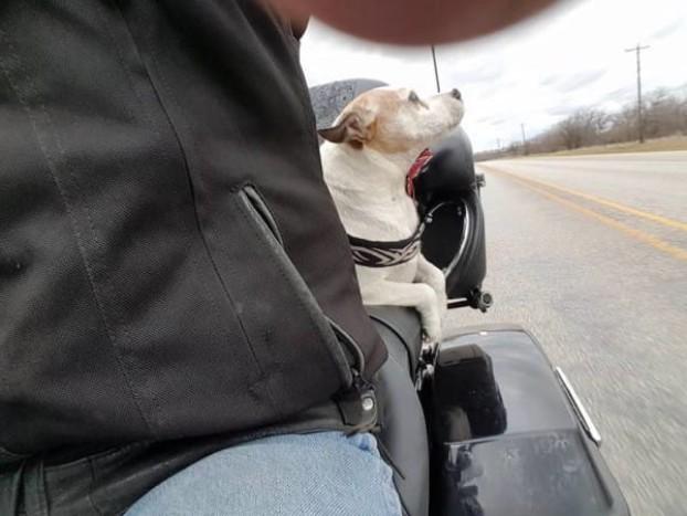 Il-lieto-fine-del-cucciolo-abbandonato-sul-ciglio-della-strada 2