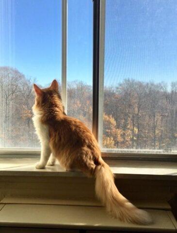 il-gattino-che-cercava-disperatamente-una-famiglia 3
