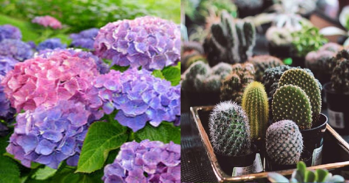 Feng Shui: piante che non dovresti avere a casa o ti porteranno sfortuna