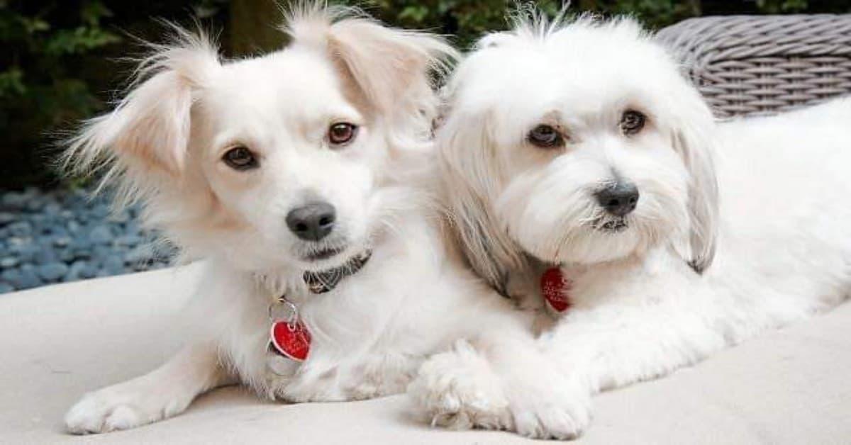Il-lieto-fine-dei-due-cuccioli-che-vivevano-da-soli-per-le-strade-di-Los-Angeles