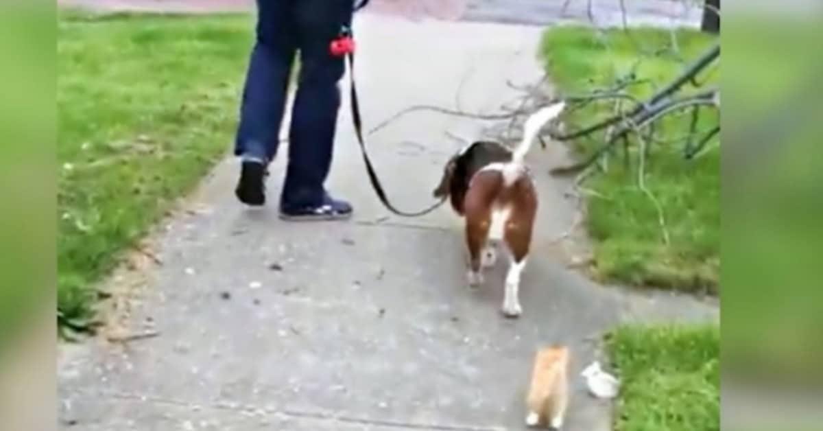 il-gattino-che-cercava-disperatamente-una-famiglia-ha-avuto-il-lieto-fine-che-sognava