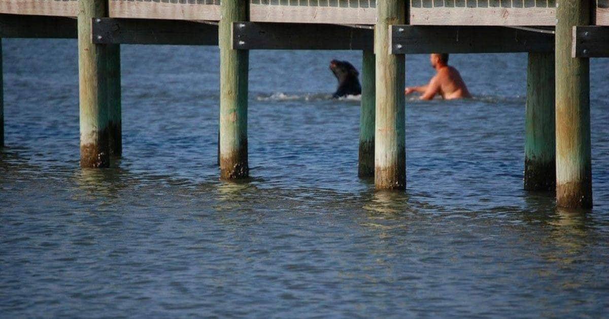 Orso-impaurito-entra-in-acqua-ma-poco-dopo-un-eroe-gli-salva-la-vita