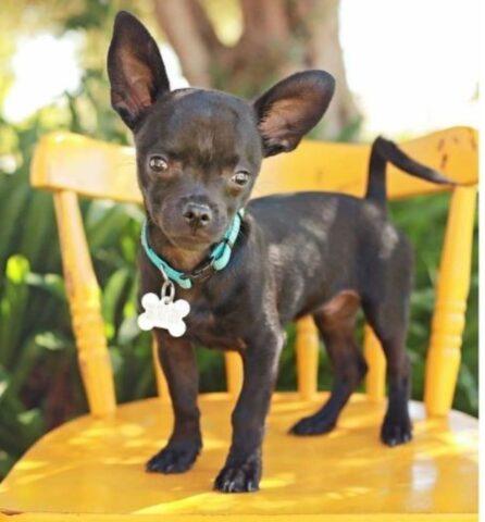 il-cucciolo-affetto-da-una-rara-condizione 2