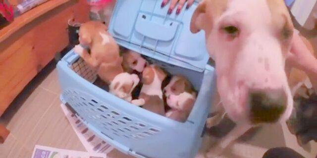 la-riunione-di-Noelle-con-i-suoi-cuccioli 2