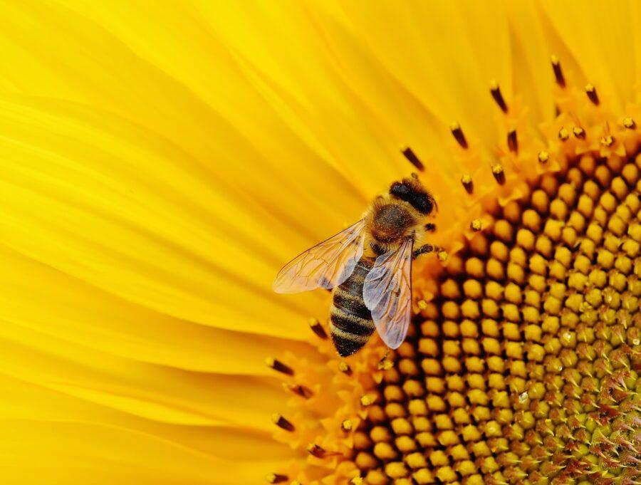Giornata mondiale delle api 2019