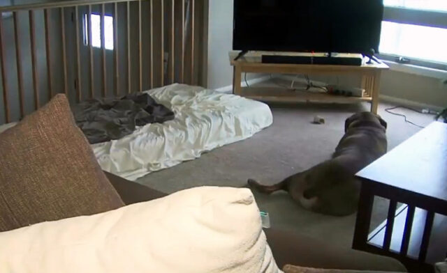 Brenton-un-cane-molto-protettivo 3