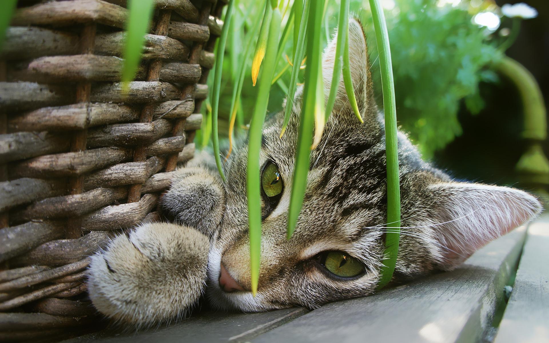 Piante velenose e non velenose per gatti