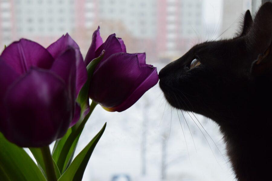 piante tossiche per i gatti