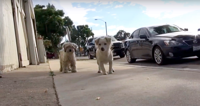 i-due-cuccioli-che-vivevano-per-le-strade-di-Los-Angeles