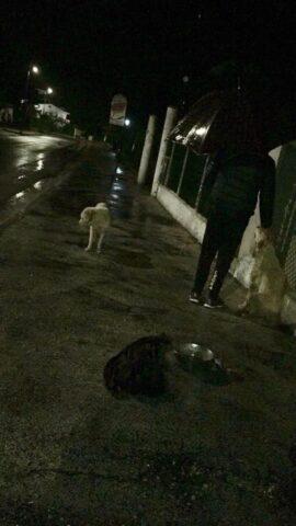 Sofia-pioggia-scena-incidente