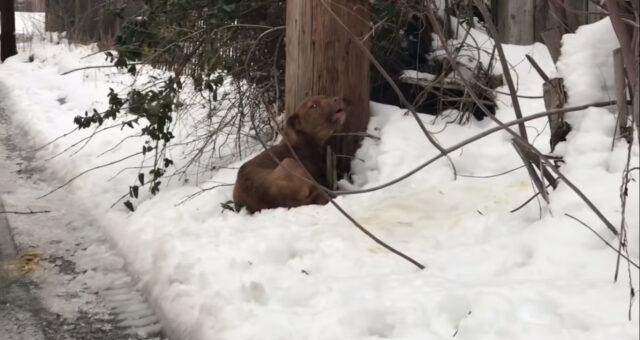 il-cane-abbandonato-in-mezzo-al-bosco 1