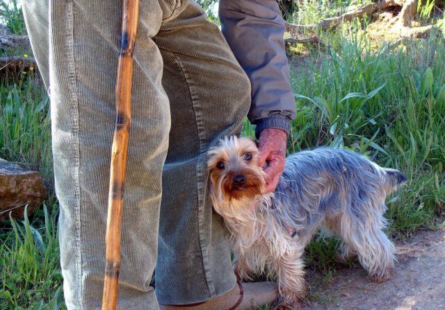 anziano-cane
