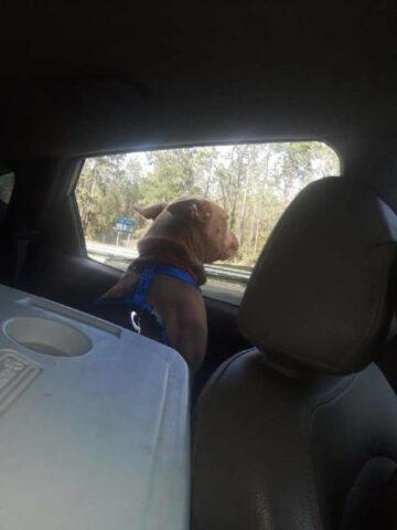 Blue-il-cucciolo-mandato-via-dalla-sua.-famiglia 2